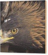 Alert Golden Eagle Wood Print
