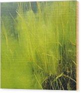 Algae Wood Print by Alexis Rosenfeld
