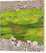 Algae Bloom Natural Abstract Art Of Nature Wood Print