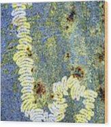 Algae Wood Print by Dr Keith Wheeler