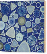 Algae, Fossil Diatoms, Lm Wood Print