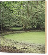 Algal Bloom In Pond Wood Print by Michael Marten
