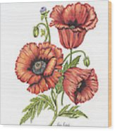 All About Poppies Wood Print