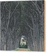 Alley . Provence Wood Print