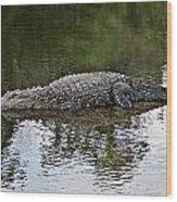 Alligator 1 Wood Print