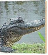 Alligator Cameron Prairie Nwr La Wood Print