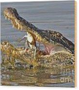 Alligator Get Lunch Wood Print