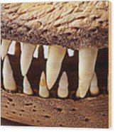 Alligator Skull Teeth Wood Print