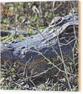 Alligator Two Wood Print
