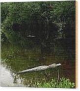 Alligators In The Evergaldes Wood Print