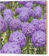 Allium Flower At The Boston Common Wood Print