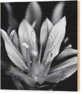 Allium Mono Wood Print