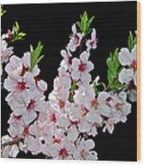 Almond Blossom 0979 Wood Print