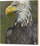 Almost There - Bald Eagle Wood Print
