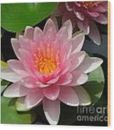 Almost Two Pink Water Lilies Wood Print