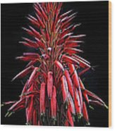 Aloe Flowers Wood Print