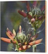 Aloe Vera Blossoms  Wood Print