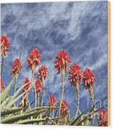 Aloes South Africa Wood Print