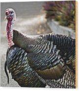 Aloha Turkey IIi Wood Print