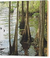 Along The Waccamaw - Cypress Swamp Wood Print