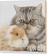 Alpaca Guinea Pig And Silver Tabby Cat Wood Print