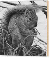 Alpha Squirrel  Wood Print