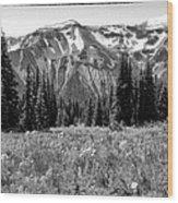 Alpine Meadow Viii At Mount Rainier Wood Print