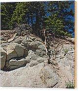 Alpine Pine Hangs On For Life Wood Print
