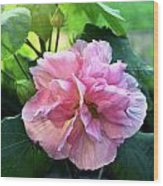 Althea Rose Of Sharon Wood Print