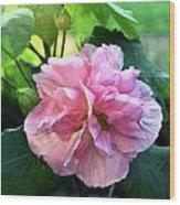 Althea Rose Of Sharon Wood Print