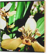 Always Orchids Wood Print