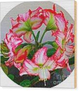 Amaryillis Flower Ring Wood Print