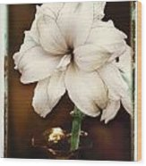 Amarylis Wood Print