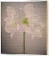 Amaryllis Flowers Wood Print by Nathan Blaney