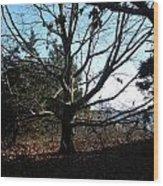 Amazing Tree Wood Print