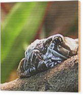 Amazon Milk Frog Wood Print
