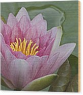 Amazon Water Lily Victoria Amazonica Wood Print