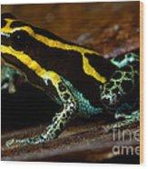 Amazonian Poison Frog Wood Print