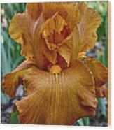 Amber Iris Wood Print