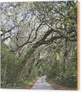 Amelia's Canopy Wood Print