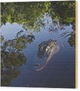 American Alligator In The Okefenokee Swamp Wood Print