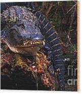 American Alligator On A Cypress Tree Wood Print