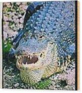 American Alligator Wood Print