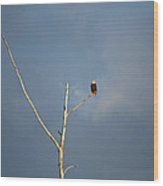 American Bald Eagle - Overlooking Naples Florida Gordon River Wood Print