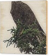 American Bald Eagle In Tree Wood Print