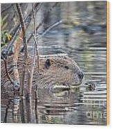 American Beaver Wood Print