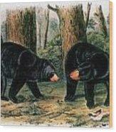 American Black Bear, 1844 Wood Print
