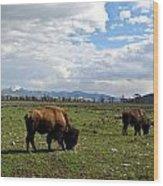 American Buffalo 10 Wood Print