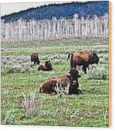 American Buffalo 16 Wood Print