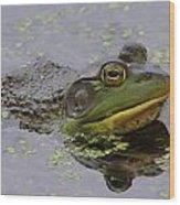 American Bullfrog Wood Print